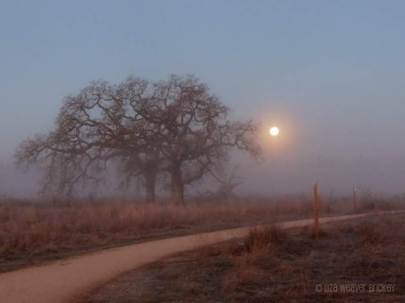 Moon setting on a sunrise walk