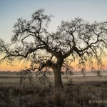 December 2016 Winter Solstice Walks in Sebastopol