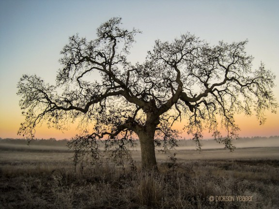 Photo of tree at sunrise in California