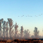 migration-of-the-birds