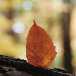 Join Us September 21 for the Autumnal Equinox